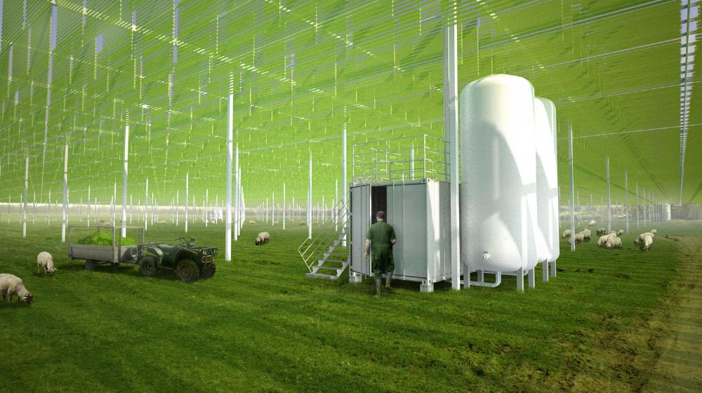 algae farming Growing algae for biodiesel use - what's the best type of algae for biodiesel discover the best type of algae for biodiesel and how algae can meet the demand for biodiesel.